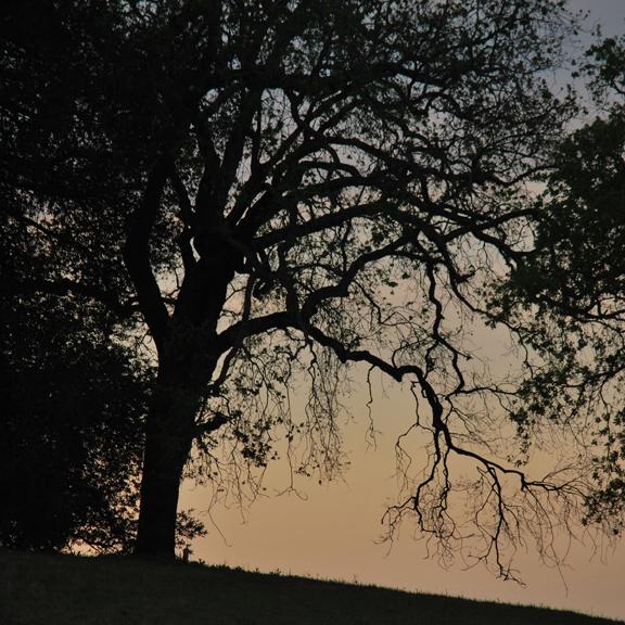 silhouete oak 2015